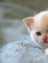 猫拉肚子怎么办