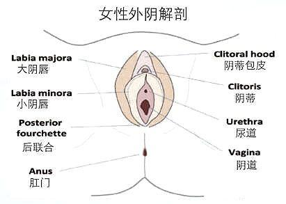 私密话题 | 女性整形揭秘—小阴唇整形北京五洲妇儿医院给你恰到好处的美